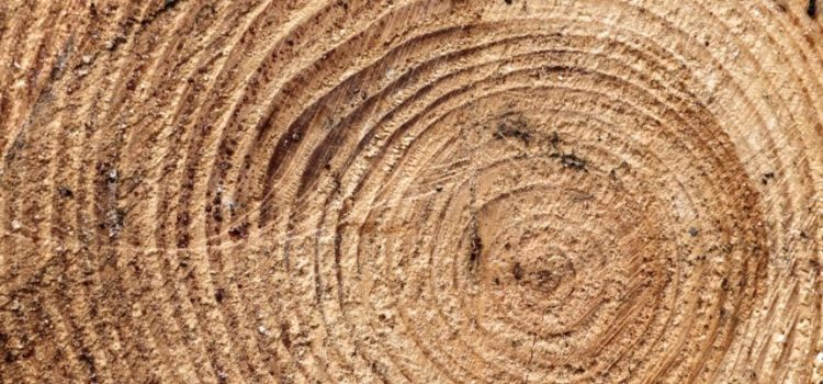 Tre falsi pregiudizi sui serramenti in legno